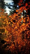 orange leaves on a fall tree