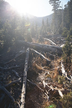 bright sunlight and fallen trees in a forest