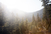 bright sunlight shining on a pine forest surrounded by mountains