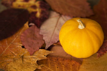 a mini pumpkin and fall leaves