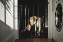 a dog and baby behind a baby gate