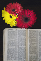gerber daisies and open Bible