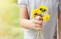 A little girl with a handful of dandelions.