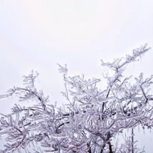 Ice on three limbs.