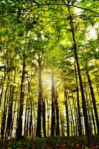 A day in late summer, before the leaves had started to change. The forest is a lovely place to worship our creator.