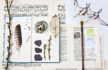 seabird collage, feather, pussy willow, sheet music, collage, collection, trinkets, memories, paint brush, seabird, bird,  journal