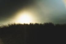 sea oats on a sand dune at sunrise
