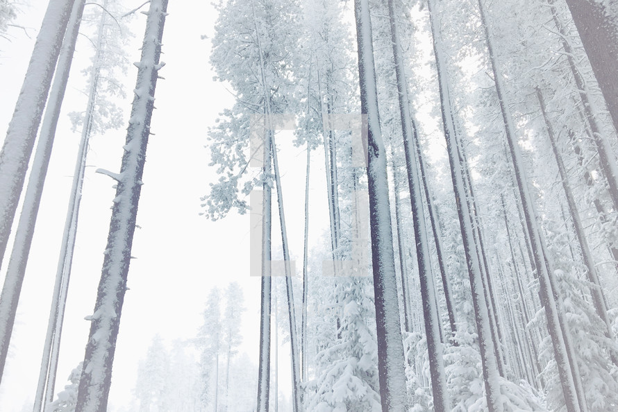 misty, frosty, foggy, snowy woods