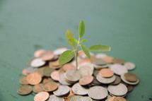 sprout in a pile of coins