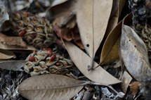 magnolia cones and brown leaves on the ground
