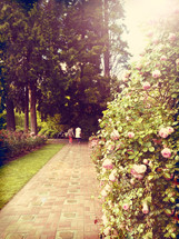 Couple strolling on a brick path in a rose garden.