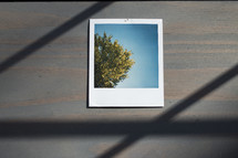 polaroid photograph on wood