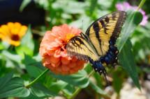 a butterfly on a peach flower