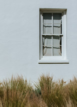 tall grasses and exterior window