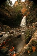 Forest creek stream