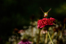 a hummingbird on a flower