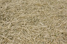 bunch of straw
