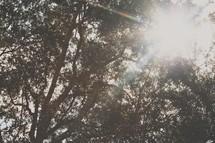 Sunrays shining through trees.