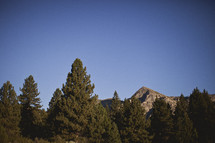 Tall trees stand in the foreground of a mountain range.
