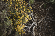 Yellow flowers growing by the roots of a tree.