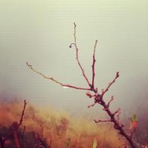 rain drop on a bare branch