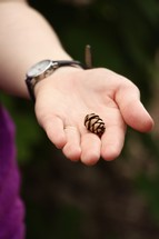 tiny pine cone in a hand