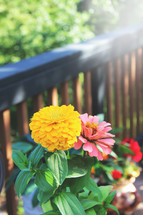 flowers on a porch