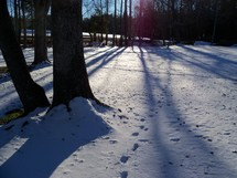A set of footprints cast shadows along with trees in the snow on a cold winter day in Virginia.
