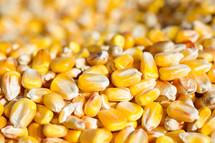 Kernels of corn.