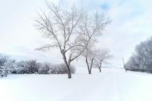 a picturesque winter scene