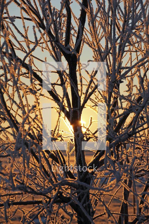 ice on trees