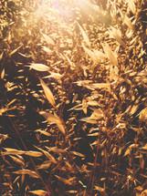 grass under the golden glow of sunlight