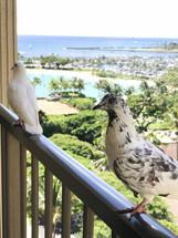 pigeons on a balcony railing