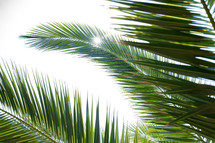 palm leaves and sunburst