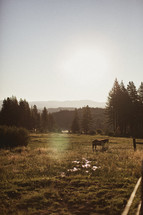 Horse in a field with trees and mountains in the distance