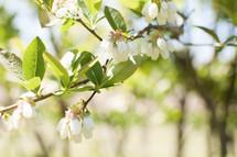 Blooming spring tree.