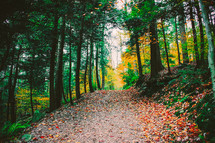 fall leaves on a trail surrounded by trees