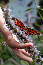 hand on a butterfly bush flower and a butterfly