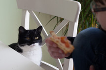 cat watching a child eating a sandwich