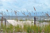Sea oats and storm fence edge the beach.