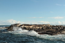 waves crashing into a rocky shore with sea lions basking in the sun