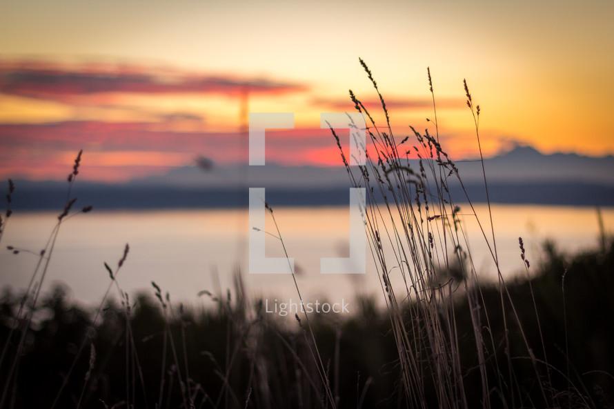 tall grasses at a lake shore at sunset