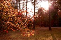 fall trees in a backyard