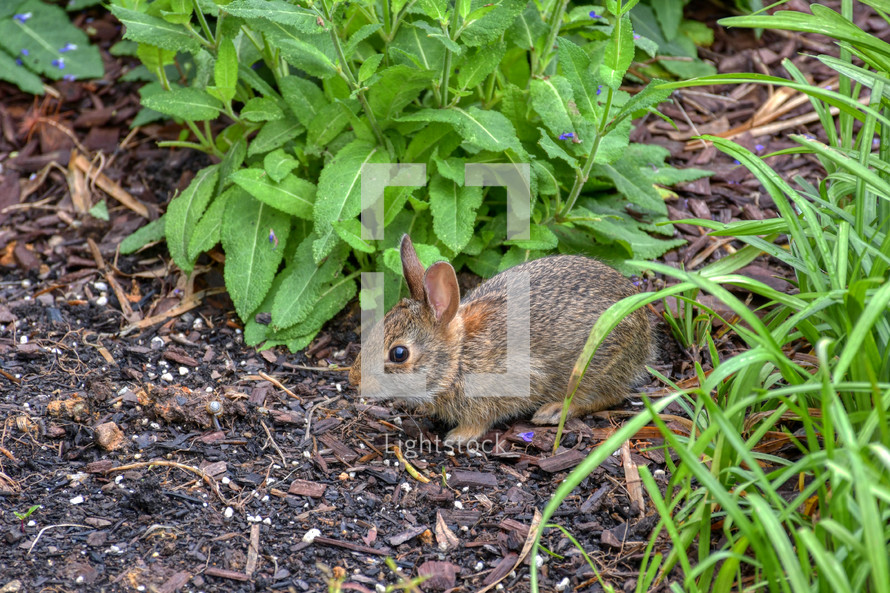 baby bunny in a flower bed