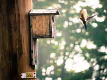 a bird flying towards a bird house