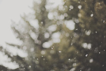 out of focus snow falling by evergreen trees