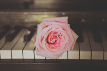 pink rose on a piano