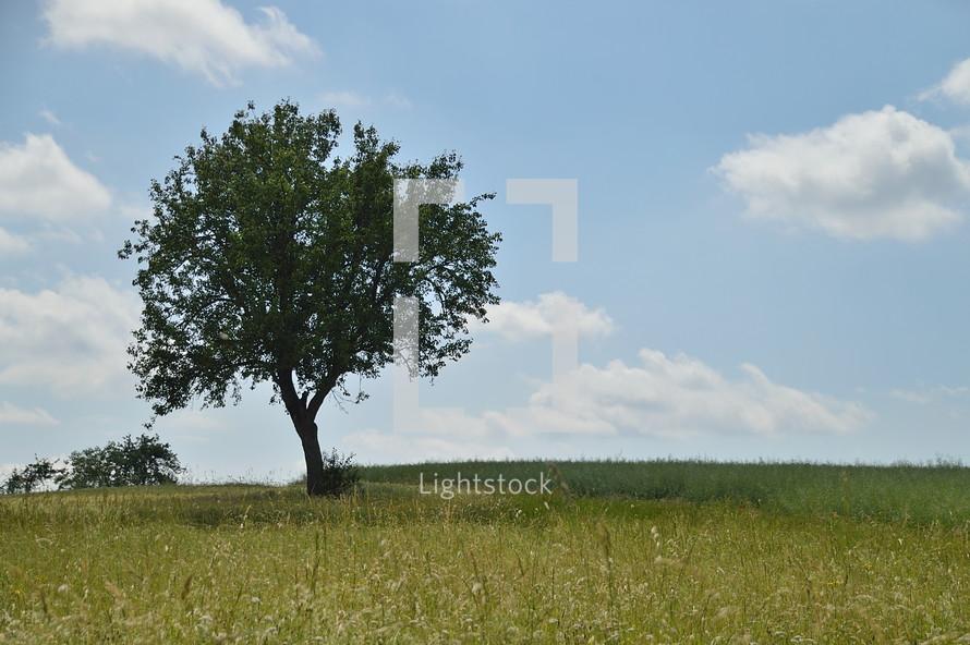 single tree in a spring field