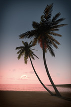 palm trees on a beach at sunset