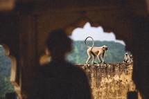 monkey in a temple